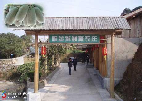 泰顺百福园亚阳店风景区