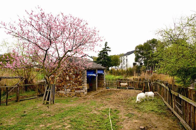 田园 乡村别墅 羊圈 耕岛是很奇妙的地方,它居于旺山的一片水域中央,一条小河围绕着耕岛,似护城河般,成了耕岛的天然屏障;它的面积说不上很大,却将大部分土地用来种植花木、开垦田园、养殖家禽牲畜,说是酒店,却只建了10幢独栋别墅,外加主楼十几间客房。 耕岛,所提供的就是远离喧嚣、远离人群,安安静静的乡村田园生活,追求的是如闲云野鹤般的怡然自得。 垂枝海棠 花间餐厅 微博抢房 耕岛别墅度假酒店为本报读者提供价值880元/晚(含早餐)的观景双床房2间。请读者关注新浪微博@温都旅游生活周刊和@苏州旺山耕岛官方微博